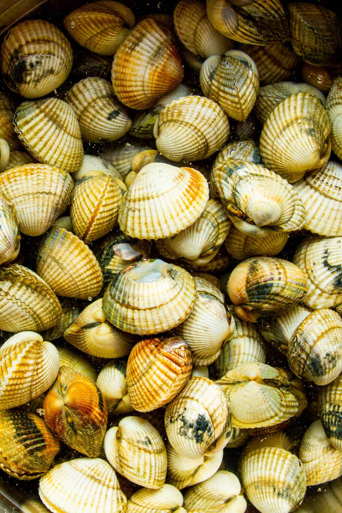 Raw cockles in water.